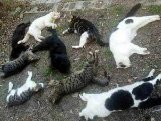 Karaman'da kedi ve köpekler telef edildi